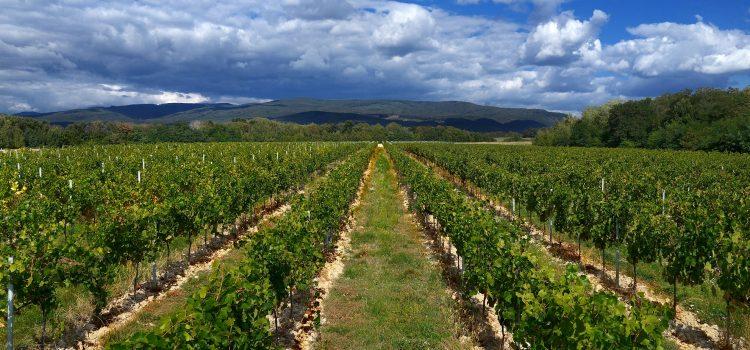 Vína z vulkanického Vihorlatu